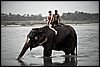 Elephant, Dutch Girl, Mahout Photo: Tourists gather for the morning elephant bath at Chitwan National Park.  For a nominal price, tourists can help wash the elephants or settle for a ride and a soaking.