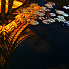 Lily Pads Photo: A small pavilion is reflected in a pool of water in Old Dali.