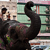Downtown Traffic Photo: An elephant causes a slight stir on the streets of Delhi.