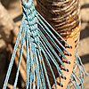 Bed of Thread Photo: The knotted end of a hammock.