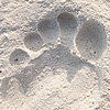 White Sand Beach Photo: A footprint and a sand-caked foot on Ko Lipe's Pattaya beach.