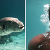 Puffer Photographer Photo: A diptych of underwater marine life around Ko Lipe:  a puffer fish (left) and an intrepid photographer (right).