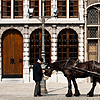 Feed Bucket Photo: A horse is fed by the driver of the tourist buggy in front of the guild houses.