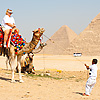 Cairo Curtain Call Photo: An overworked camel goes on strike.